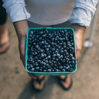 A box of Maine's signature, tiny blueberries.