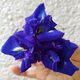 Butterfly pea flower in unfettered form.