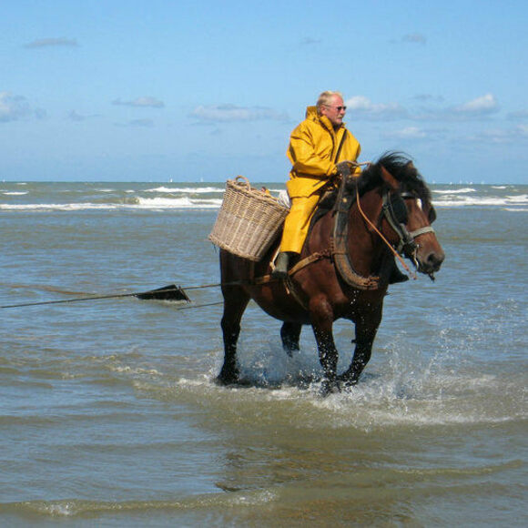 The net behind the horse carries scores of shrimp.
