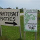 """Follow the signs. The fritters are also known as """"whitebait patties."""""""