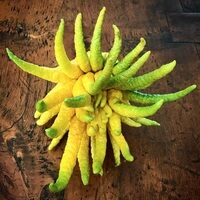 Fingered citrons symbolize luck, long life, and happiness.