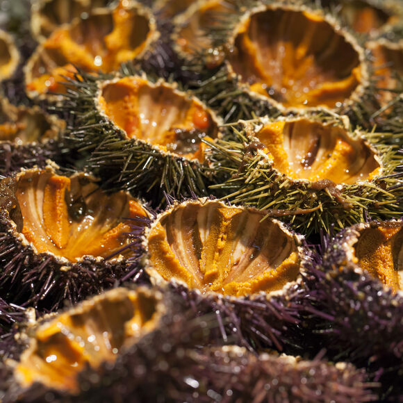 An array of fresh sea urchin.