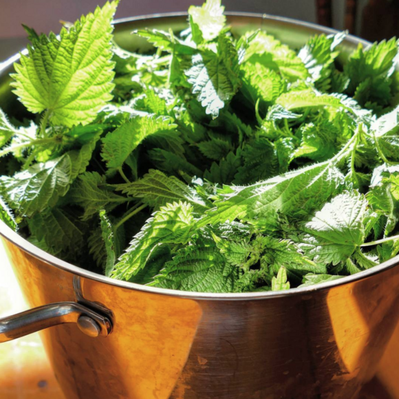A pot of boiled nettles means savory greens and earthy tea.