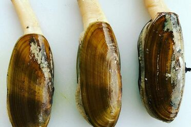 The Complicated Business of Farming Snails in America - Gastro Obscura