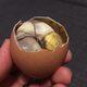 Boiled fertilized duck egg.