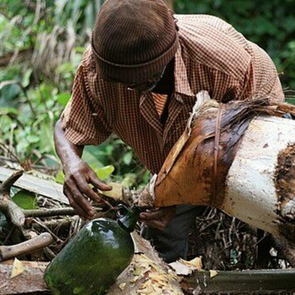 Image result for palm wine
