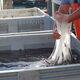 A worker runs high hands through hagfish slime.