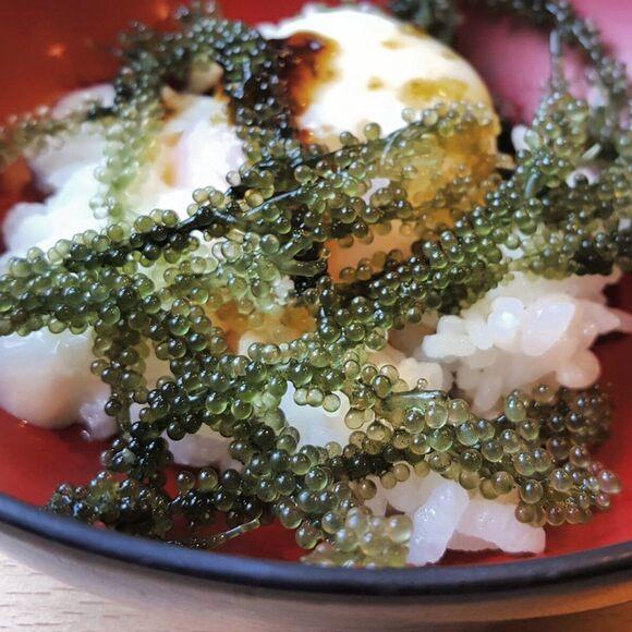 Steamed rice, onsen egg, soy sauce & umi budo.