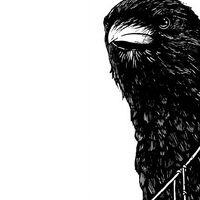 Profile image for CorvusCorvus