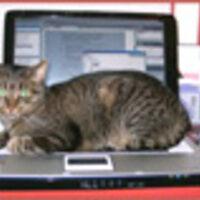 Profile image for wordsilk