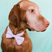 Profile image for carstelvizsla