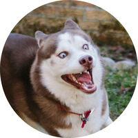 Profile image for doobybrain