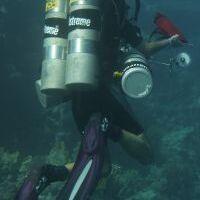 Profile image for divingbell