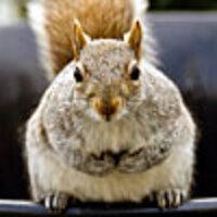 Profile image for nycswashbuckler