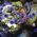 pixelatedorchid