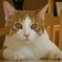 Profile image for agiel
