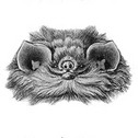 Profile image for treeswithknees